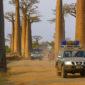 MADAGASCAR, le Grand Sud